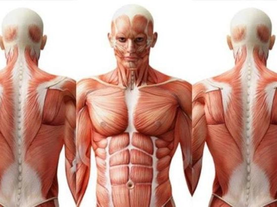 Human Body And Its Interesting Features
